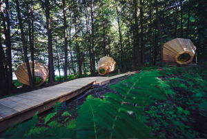 Naturephone : découvrir ce que disent les arbres.